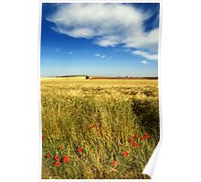 Poppies and cloud Poster