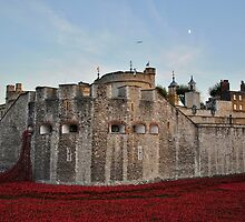 Poppies at the Tower of London - At Dusk by InterestingImag