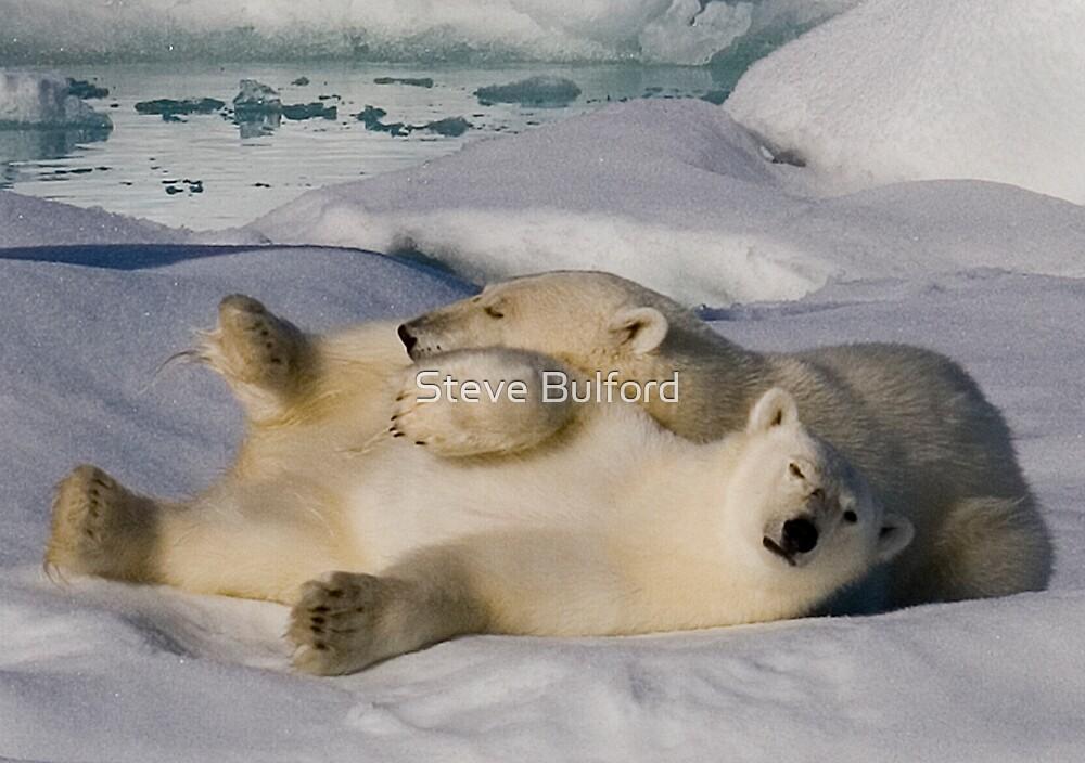 Polar Bear Cubs II by Steve Bulford