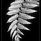 Fern Dance by Holly Kempe