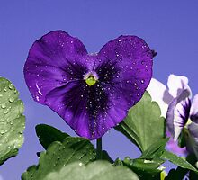 Pansy Heart by Jennifer Lee Johnson