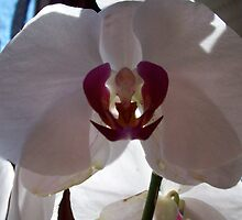 white flower by antwilliams