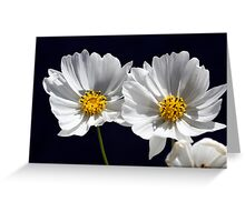 Twin White Cosmos Greeting Card