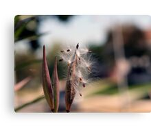Natures Simplistic Beauty Canvas Print