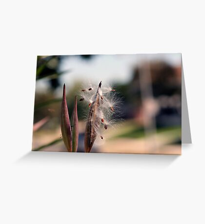 Natures Simplistic Beauty Greeting Card