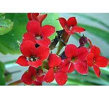 Red flowers Photographic Print