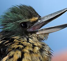 Baby Kingfisher by Robyn Carter