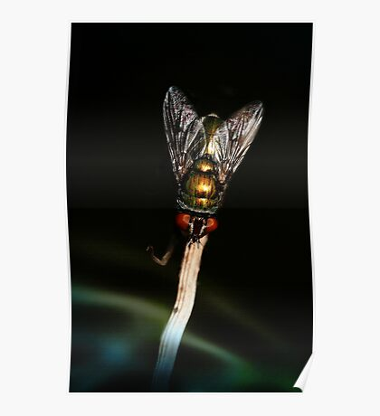 Nocturnal Fly Poster
