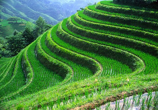 Perfect terraces by Jenny Hall