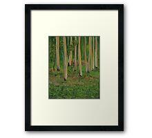 Last Rays Of Light - Gap Creek Framed Print
