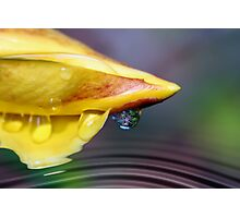 Allamanda Tears Photographic Print