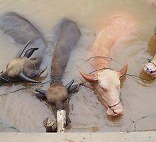 Water Buffalo by dragonflyblue