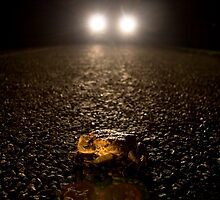 End of the Toad by richocam