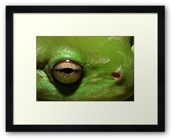 """""""Kermit"""" the Frog by richocam"""