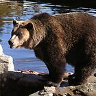 Grizzly by mstrasse