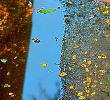 Rain Puddles by Julie Marks