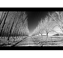 Tree lined  Photographic Print