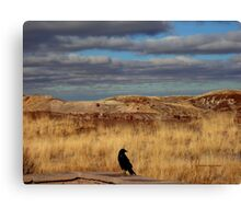 Raven at the Petrified Forest Canvas Print