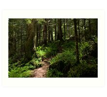 Trail to Green Lake - Mt. Rainier N. P. Art Print