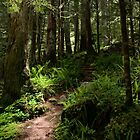 Trail to Green Lake - Mt. Rainier N. P. by Mark Heller