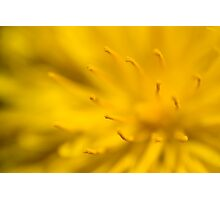 Dandelion flower Photographic Print