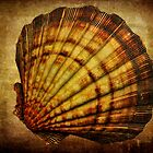 Shell of Life by PineSinger