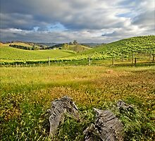 Rolling Vines by smylie