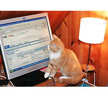 CHECKING FOR CAT E-MAIL Photographic Print