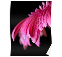 Pink Droplets Poster