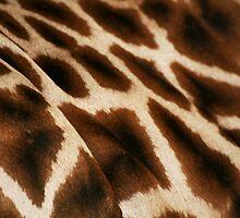 Giraffe by Helen Patmore
