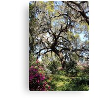 Beauty In The Trees Canvas Print