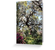 Beauty In The Trees Greeting Card