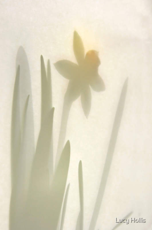 Daffodil Shadows by Lucy Hollis