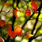 Fall Leaves by Vasile Stan