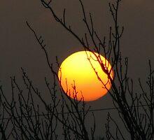 sun in the trees by daantjedubbledutch