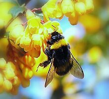 BUMBLE by kevsphotos2008
