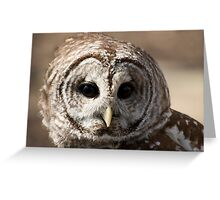 Beautiful Barred Owl Greeting Card