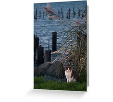 Cat at the Bay Greeting Card