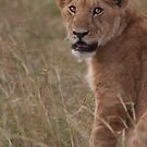 Lion by Steve Bulford
