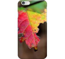 Yellow And Red Maple Leaf In Autumn | Middle Island, New York  iPhone Case/Skin