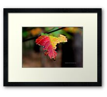 Yellow And Red Maple Leaf In Autumn | Middle Island, New York  Framed Print