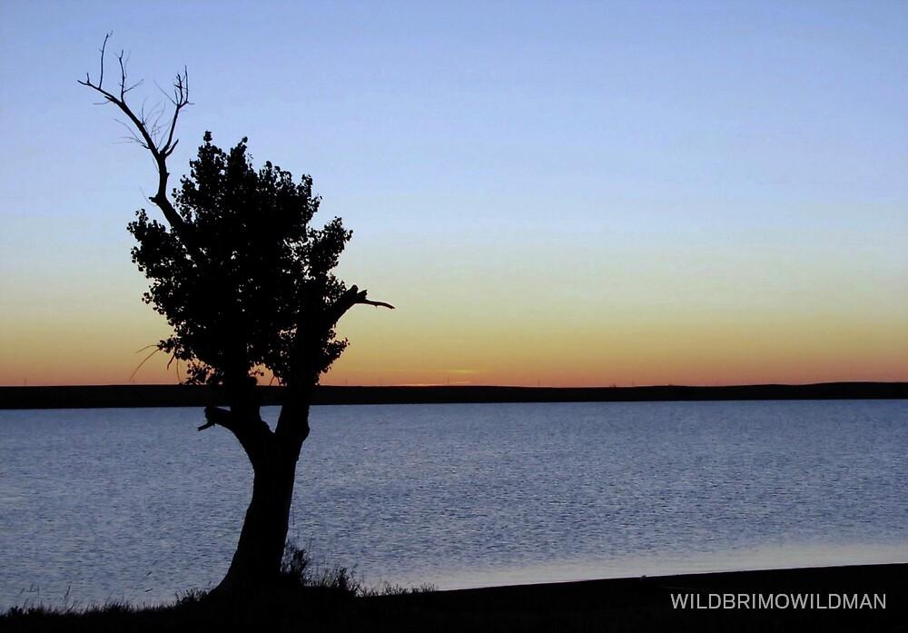Lonley Tree! by WILDBRIMOWILDMAN