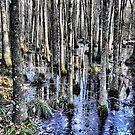 Winter In The Swamp by Suni Pruett