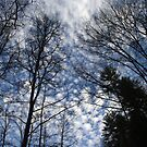 Smoky Mountain Peace by Anthony Pierce