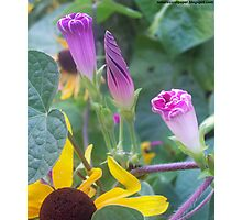 Beautiful Cone Shaped Flowers Photographic Print
