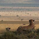 Surveying The Plains by Steve Bulford