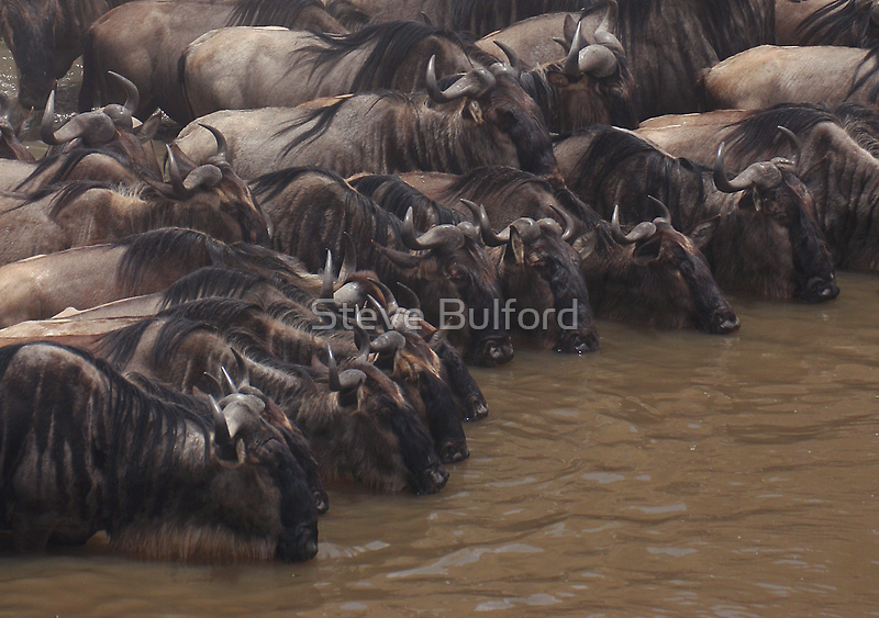 The Watering Hole by Steve Bulford