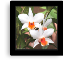 Painted Orchids Canvas Print