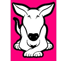 English Bull Terrier Crossed Paws  Photographic Print