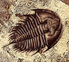 The Fossil by wjclark63